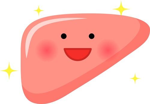かわいい肝臓のイラスト