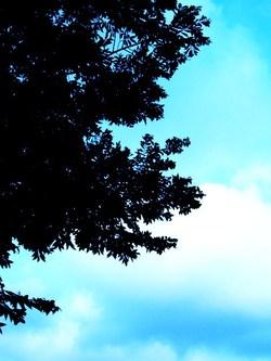木と青い空